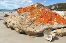 Anniversary Bay Orange Rock